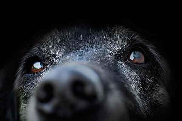 犬吉專欄文章-動物不等於人